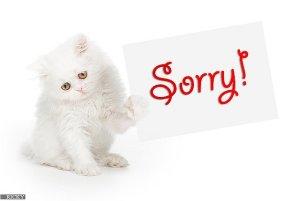 say im sorry