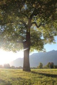a tree and shade