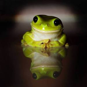 frogs 1