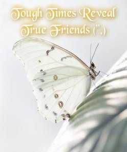 butterfly - tough times reveal true friends