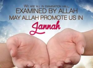 jannah, paradise, promotion, exams, allah